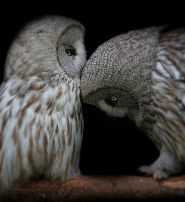 OwlsOfTheNight.jpg